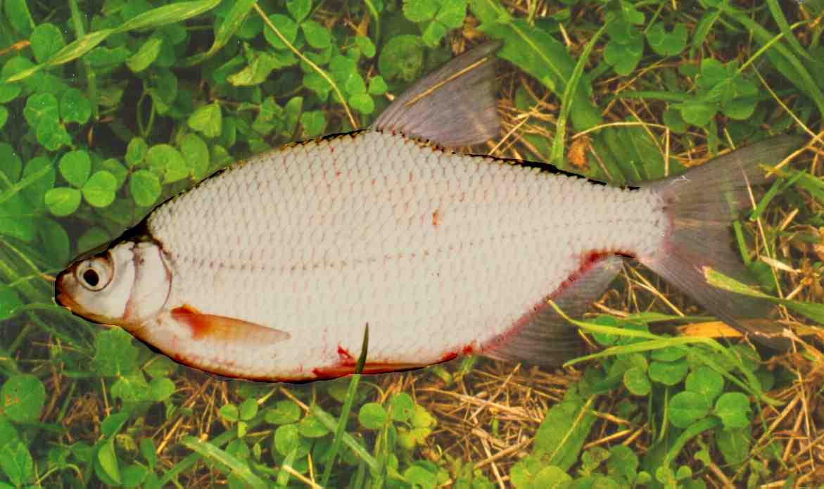 Teich fische f ttern garten design ideen um ihr zuhause for Garten fische